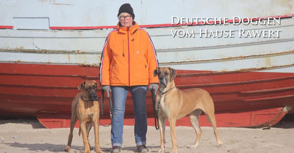 Deutsche doggen rawert